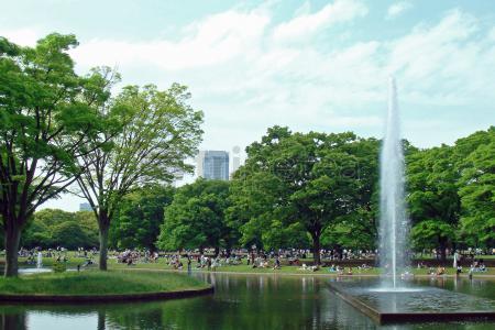 Ruta del tercer y último dia:@Harajuku, @Yoyogi park, City Hall, Barrio de@Shinjuku